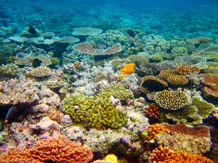 Tout savoir sur la Grande Barrière de Corail